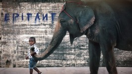 child-boy-and-elephant-wallpaper_1249702416